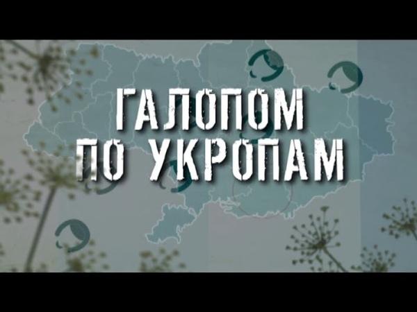 ГТРК ЛНР Галопом по укропам 17 40 27 марта 2020 год