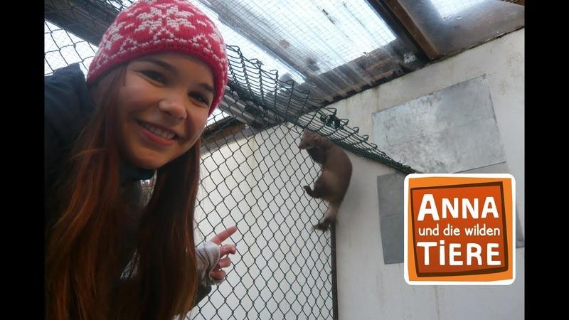 Frech wie ein Marder Doku Reportage für Kinder Anna und die wilden Tiere