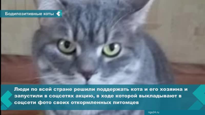 Красноярцы поддержали мужчину, кота которого из-за лишнего веса не пустили в самолет, показав своих упитанных питомцев