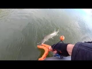 Щука укусила за липгрип. Спрей спас рыбалку