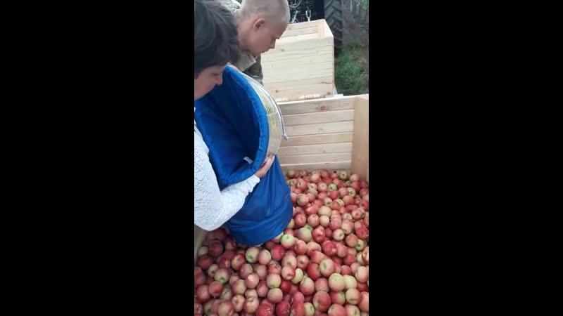 Специализированная сумка для сбора плодов