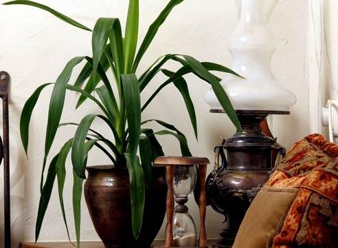Комнатные растения  живые друзья