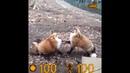Half Fox