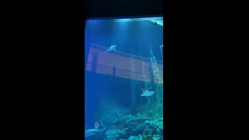 The Dubai Aquarium Underwater Zoo3