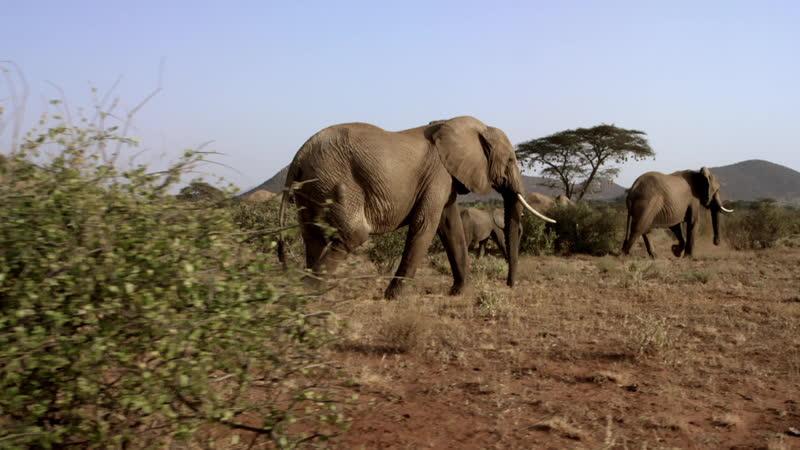 3 сентября в 19:00 смотрите «Великие миграции в природе» на телеканале «HDL».