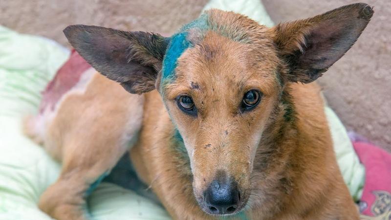 Собака пришла к людям за помощью История Спасения Альмы