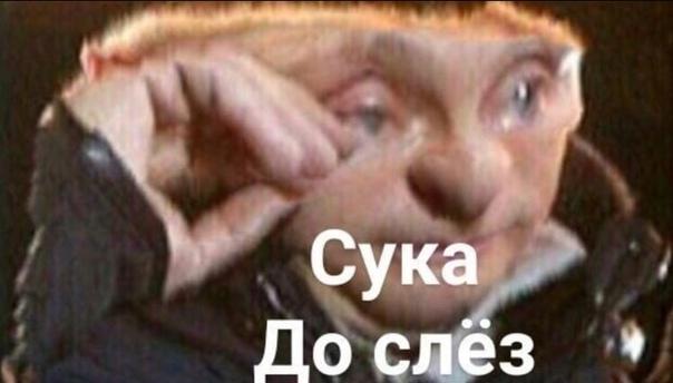 Переводы Фуллы От Насти И Фритт Слив
