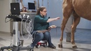 Equine Ultrasound of the Hind Suspensory