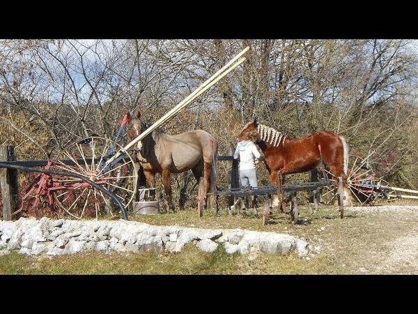 Les chevaux comtois C'est là en Bourgogne Franche Comté