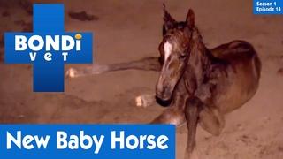 Ветеринар Бондай Бич: Рождение жеребёнка (1 сезон 14 серия) / New Baby Horse | S01E14 | Bondi Vet