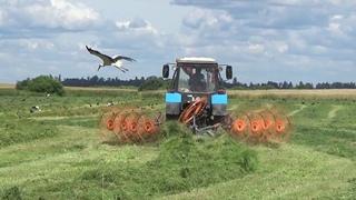 Уборка сенажа 2020: МТЗ 82 сгребает валки с травой