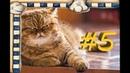 СМЕШНЫЕ КОТЫ Смешное видео про кошек, видео нарезка приколов 2021! выпуск 5