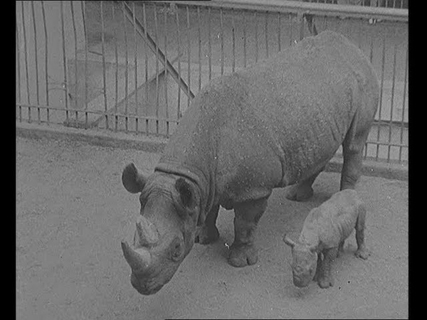 The Cutest Zoo Ever! Baby Rhino! Baby Hippo! Baby Wallaby!