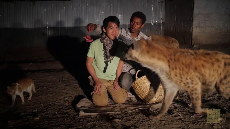 Hyena Feeding at Harar Ethiopia