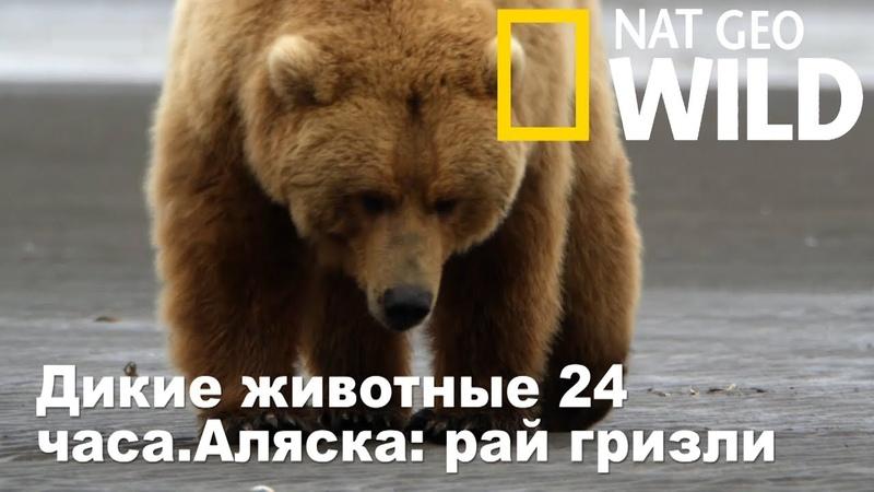 Nat Geo Wild Дикие животные 24 часа Аляска рай гризли Wild 24