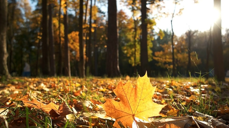 3 HOURS of Beautiful Autumn Colours ~ Amazing Nature Scenery The Best Relax Music