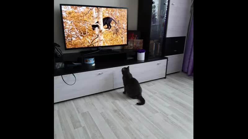 в мире животных Санька захотела попасть в телевизор