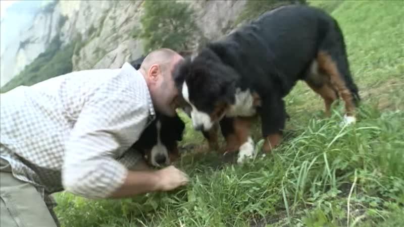 Бернский зенненхунд Планета собак Моя Планета