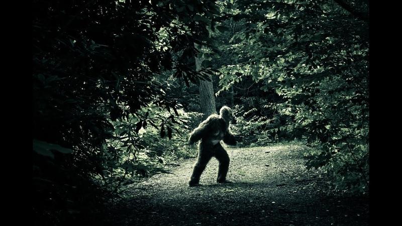 Сенсационные кадры Сне́жный челове́к существует йети сасквоч бигфут англ bigfoot