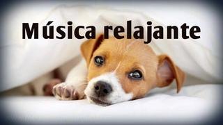 Música relajante para perros ansiosos