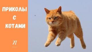 Смешные КОТЫ КОТИКИ КОТЯТА Приколы с животными #71