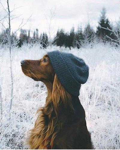 Ева Снегова