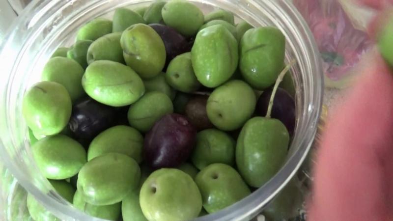 Как засолить оливки маслины ЧАСТЬ ПЕРВАЯ