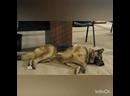 Пёс-3 смешные моменты из серии Три обезьяны