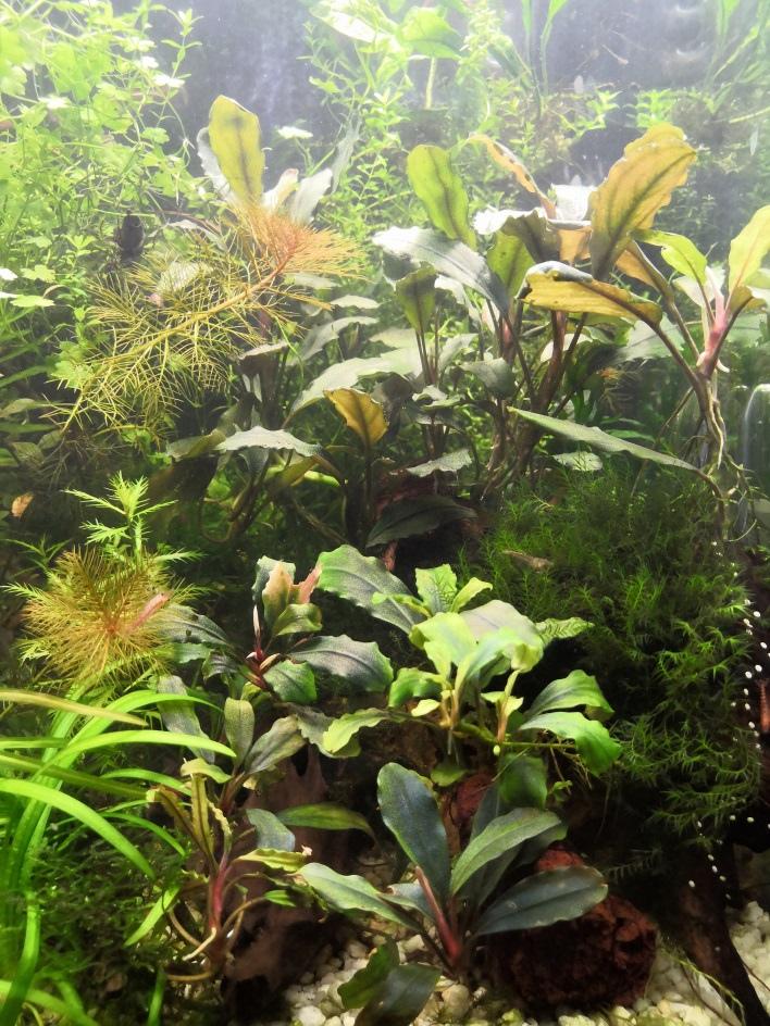 1 Юлия Черкас - Обзор светильника AQUAEL LEDDY SMART 2 PLANT, изображение №13