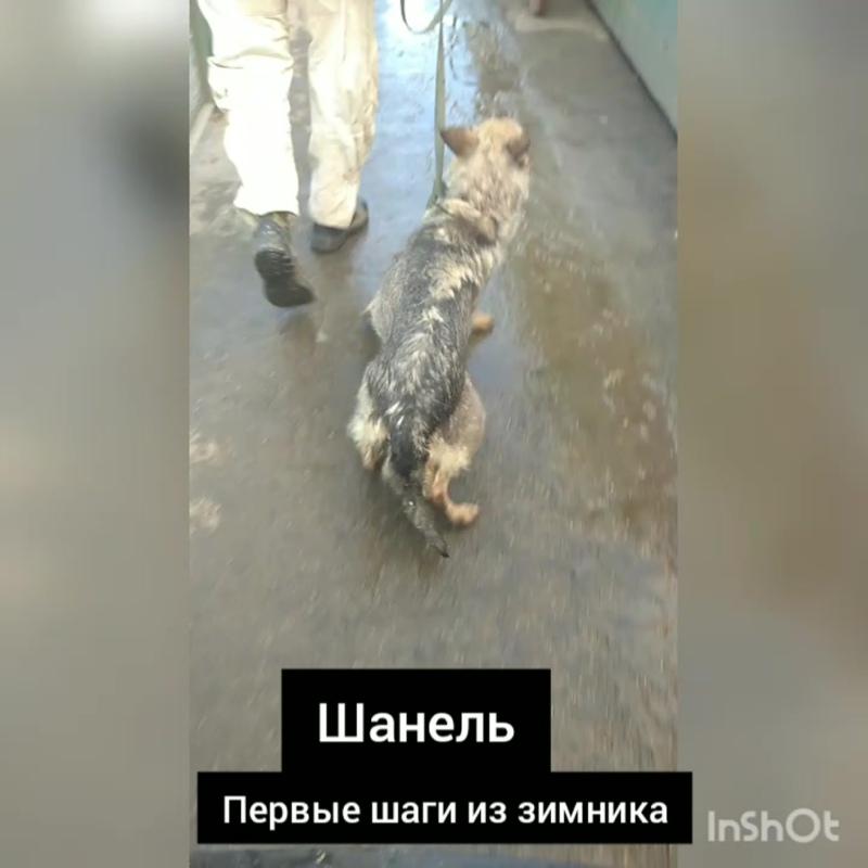 InShot_20200830_150602020.mp4