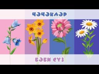 БӘБИ СҮЗ: чәчәкләр / Цветы
