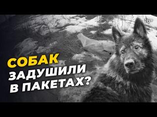Под Челнами орудуют живодеры? Трупы собак нашли в пакетах недалеко от приюта для животных