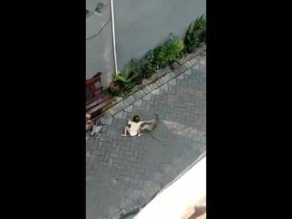 Дерзкая обезьяна пыталась похитить малайского ребенка, но мужчина запретил ей делать это :