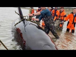 """Vídeo de Центр спасения дельфинов """"Дельфа"""""""