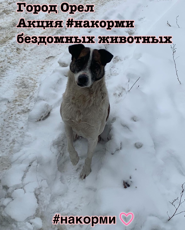 🐾Волонтеры города Орла помогают бездомным животным пережить морозы и холод, орга...