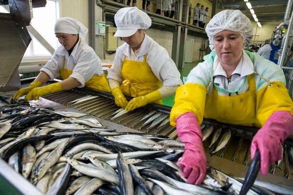 вакансии русская рыбоперерабатывающая компания бухгалтер