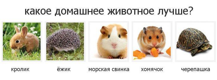 фото из альбома Руслана Галяутдинова №13