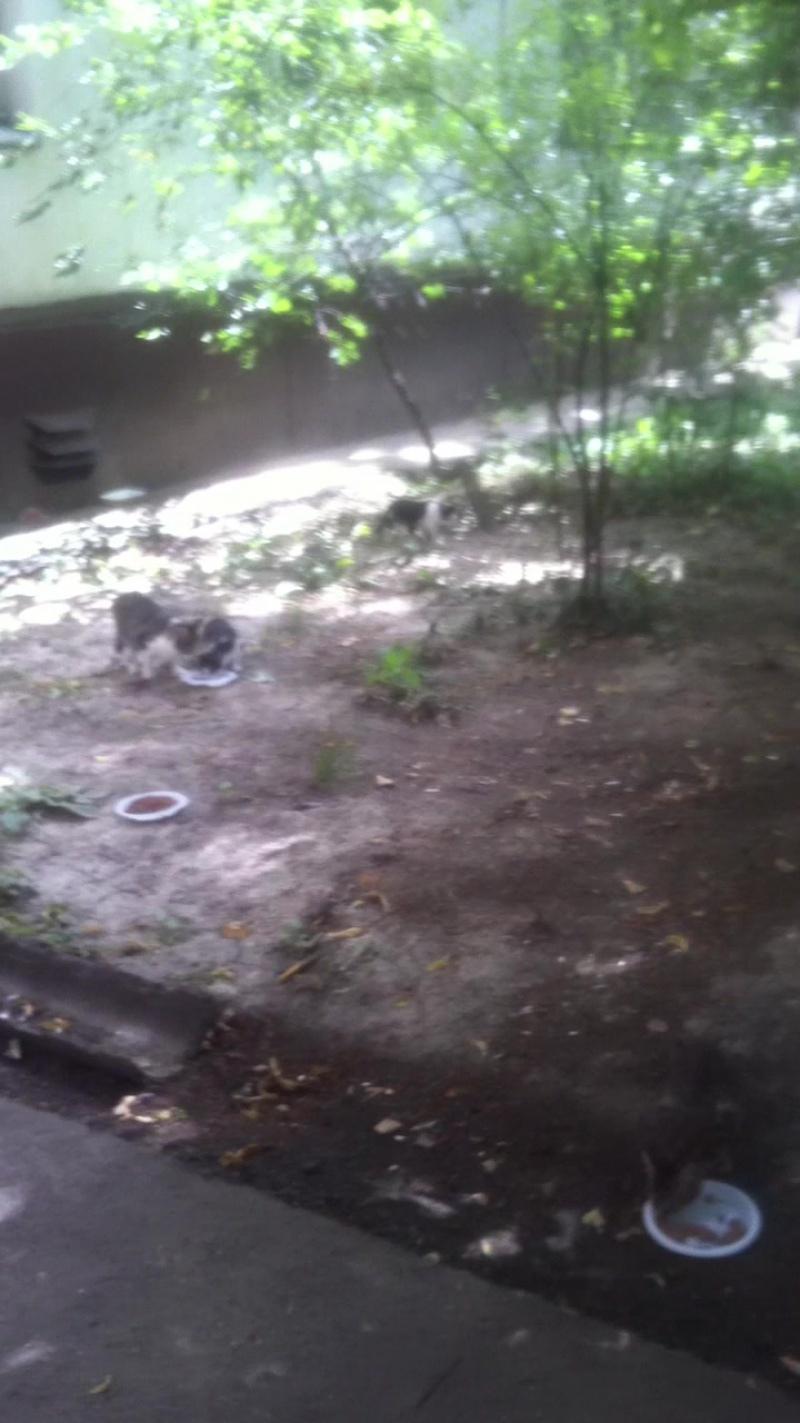 Кормим бездомную кошку и ее котят