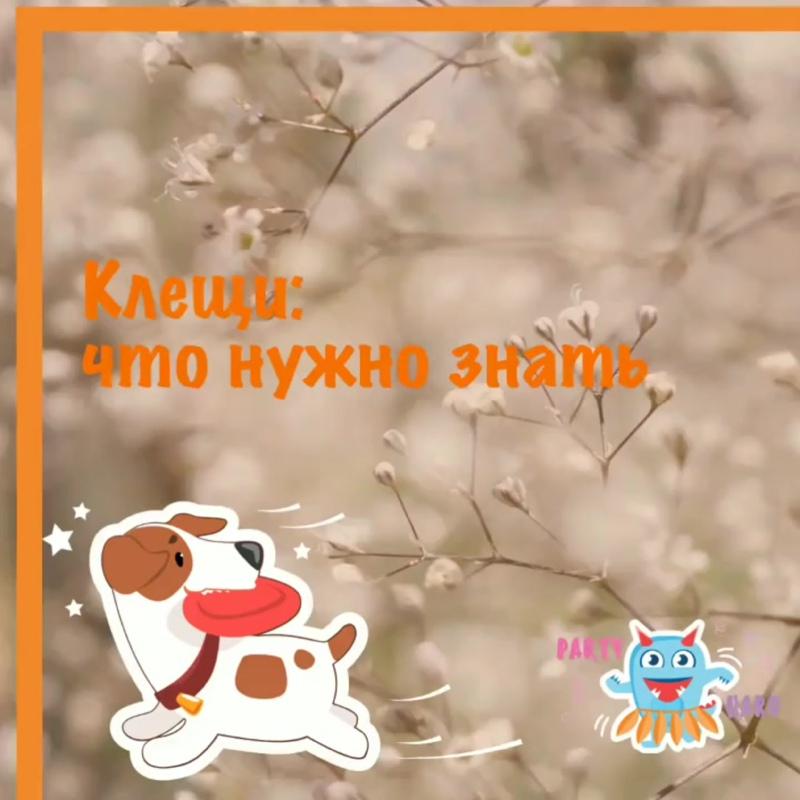 VID_86501208_125056_448.mp4