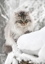 Фотоальбом Анастасии Леоновой