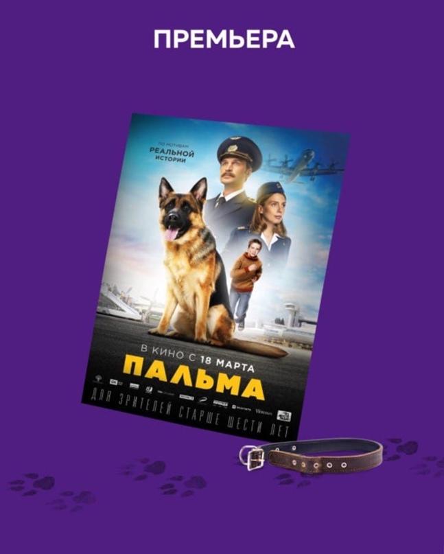 """Если ищете идеальное кино для семейного просмотра, то фильм 🐶 """"Пальма"""" претендуе..."""