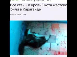 Волонтерское движение ЛиС г.Кокшетау kullanıcısından video
