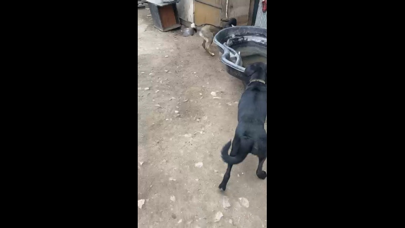 Видео от ПРИЮТ ДЛЯ БЕЗДОМНЫХ ЖИВОТНЫХ ВОЛЧОК г Челябинск