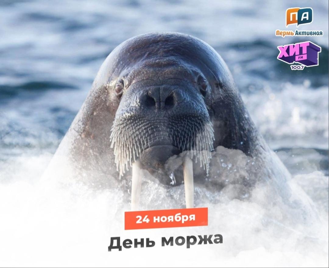 3 «В» и 4 «А» классы узнали о Дне моржа в России