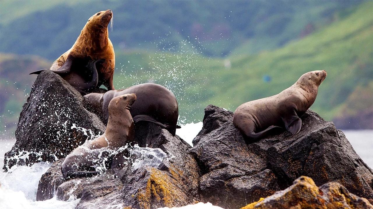 На Камчатке создадут охраняемую территорию для тюленей и каланов