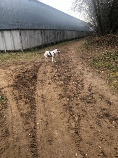 Детский городок Зил, Лыткарино , бегает собака , м...