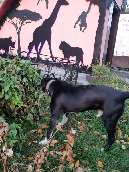 Напротив неба бегает собака черная, с белыми лапами, зеле...