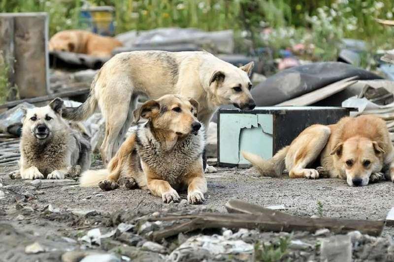 Прокуратура нашла нарушения закона в обращении с бездомными животными в Домне