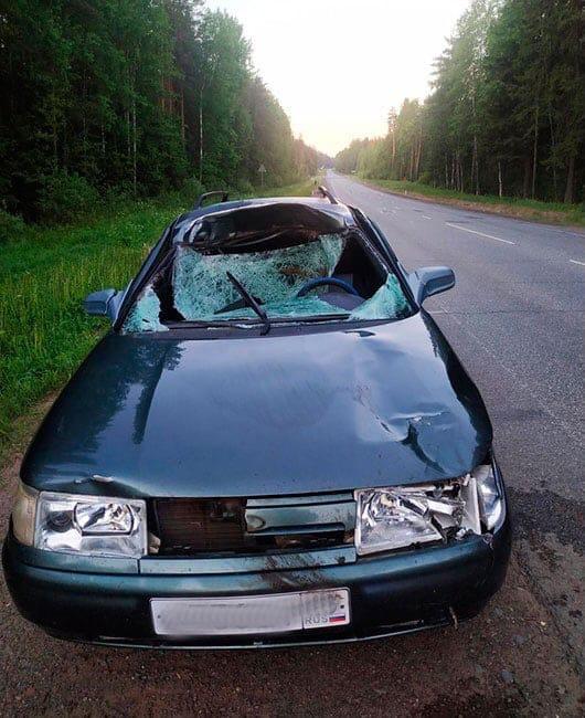 На фото автомобиль после встречи с лосемДТП
