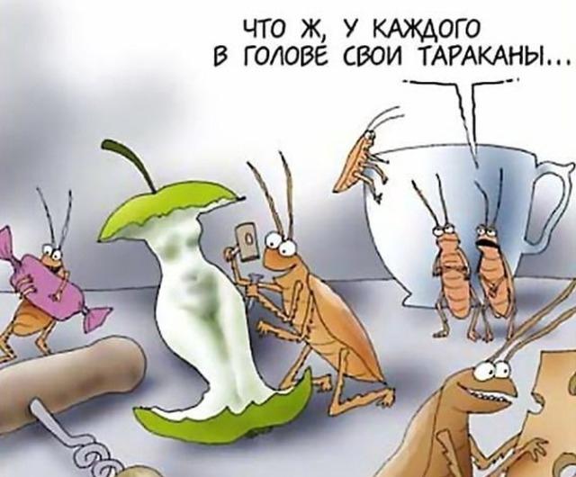 Чего боятся тараканы? Рекомендации и советы по уничтожению насекомых